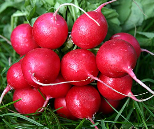 Bobby-Seeds BIO-Radieschensamen Cherry Belle Portion