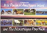 A Portrait of the Wild Ponies of Assateague Island and The Chincoteague Pony Swim Paperback – 2006 by Kevin N. Moore (Author)