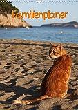 Familienplaner Katzen (Wandkalender 2021 DIN A3 hoch): Stubentiger und Streuner (Familienplaner, 14 Seiten ) (CALVENDO Tiere)