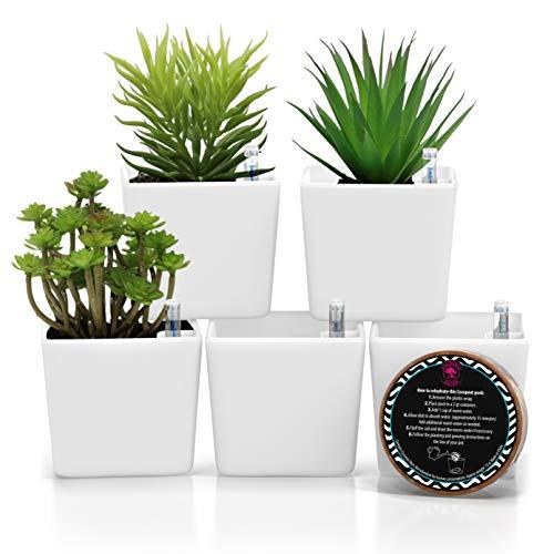 3.5' Plant pots self-Watering Succulent pots – Easy Succulent planters pots for Plants...