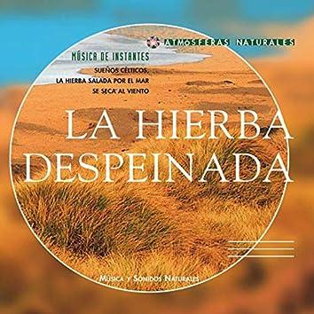 Atmosferas Naturales - La Hierba Despeinada