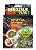 Grow Your Own Dinosaur Plant - Fun and Easy to Grow - an Everlasting Evergreen That Keeps Coming Back to Life - Grows in One Day