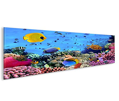 islandburner Bild Bilder auf Leinwand Aquarium Fische Meerwasser Tropische Doktorfische Panorama XXL Poster Leinwandbild Wandbild Dekoartikel Wohnzimmer Marke islandburner
