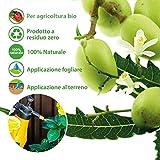 IMG-2 olio di neem insetticida repellente