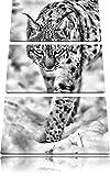 Pixxprint wachsamer Luchs im Schnee als Leinwandbild/Größe: 3 Teilig (120x80) cm/Wandbild/Kunstdruck/fertig bespannt