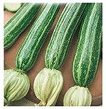 Inception Pro Infinite 40 C.ca Semi Zucchino San Pasquale - Cucurbita Pepo In Confezione Originale Prodotto in Italia - Zucchine