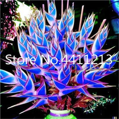 SANHOC 200 Stück Rare Farbe Heliconia Bonsai DIY Hausgarten-Topf oder Yard Blumentopfpflanze Einfach für Hausgarten-Dekoration wachsen: 6