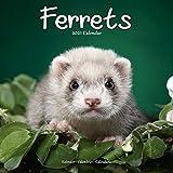 Ferret Calendar - Cute Animals Wall Calendar - Calendars 2020 - 2021 Wall Calendars - Ferrets 16 Month Wall Calendar by Avonside