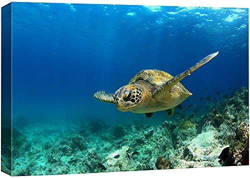 wall26 Canvas Print Wall Art Sea Turtle Gliding Through Sea Nature Ocean Photography Realism Nautical Scenic Relax/Calm Multicolor Ultra for Living Room, Bedroom, Office - 24'x36'