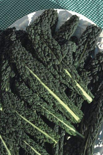 Seekay Berza 'Negro Tuscany ' ( Kale ) Aprox 1200 Semillas
