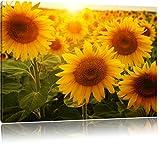 Sonnenblumen auf dem Feld, Format: 80x60 auf Leinwand, XXL
