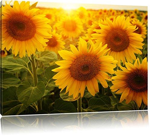 Sonnenblumen auf dem Feld, Format: 120x80 auf Leinwand, XXL riesige Bilder fertig gerahmt mit Keilrahmen, Kunstdruck auf Wandbild mit Rahmen, günstiger als Gemälde oder Ölbild, kein Poster oder Plakat