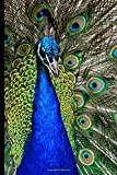 """Peacock: Lined Peacock Notebook (Journal), Peacock Gifts for Peacock Lovers (6"""" X 9"""")"""