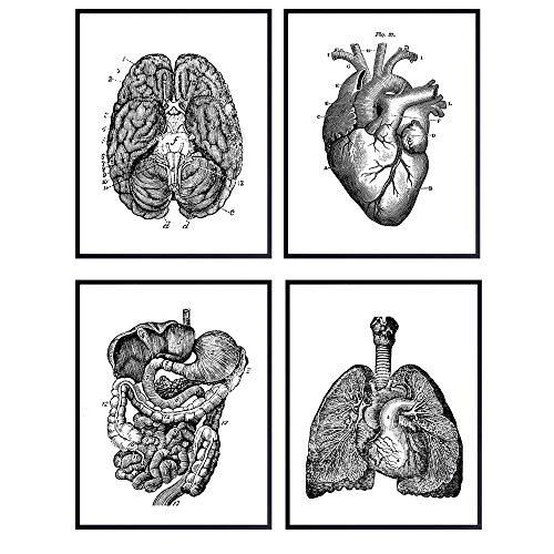 Vintage Internal Organs Wall Art Print Poster Set - Unique Gift or Steampunk Anatomy Home Decor for Dr Office, Doctor, Physician, Nurse, PA - 4-8x10 Photos Unframed - Heart, Lungs, Brain, Intestines