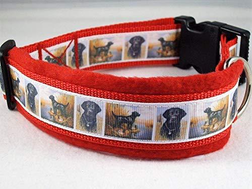 Halsband schwarzer Labrador Größe ML 45-50 cm Halsumfang
