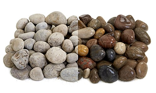 Quarrystore Assorted Scottish Beach Pebbles from 25mm to 40mm in Size - Ideal Outside Decorative Stones for Gardens - 1kg Bag
