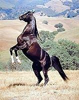 大人の子供の初心者ダイヤモンドの絵セット、DIY 5 Dダイヤモンドのデジタル絵画 黒い馬 40x50cm