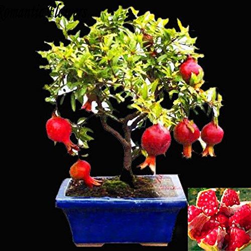 200 Rose Graines Fleurs Graines Green Beauty Blooming Ampoules naturelles élégantes plantes bonsaï Rose