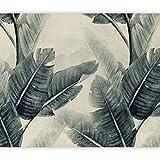 murando Fotomurales tropical Hojas 400x280 cm XXL Papel pintado tejido no tejido Decoración de Pared decorativos Murales moderna Diseno Fotográfico Planta Jungle Naturaleza como pintado b-C-0952-a-b
