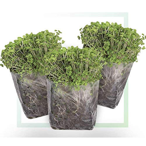 Window Garden Indoor Broccoli Microgreens Seed Starter Vegan Growing Kit – Includes Seeds, 3qts Organic Fiber Potting Soil and Pop-Up Bag – Add Water and Grow Vegetables for Healthy Salads