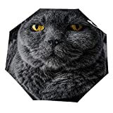Klappschirm Britisch Kurzhaar Kunst auf einem Trampolin Regenschirm Offen Schließen Winddichter...