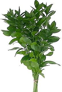 Best israeli ruscus bouquet Reviews