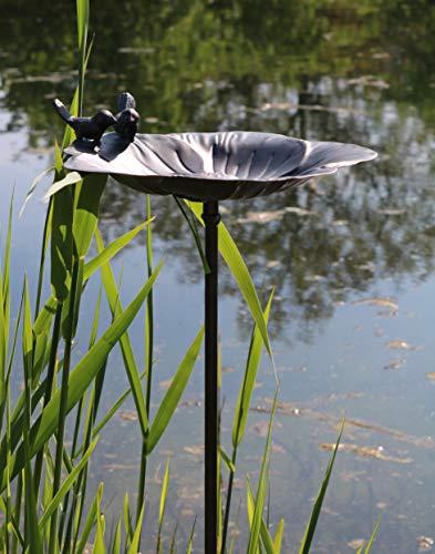 AmaCasa Bebedero para pájaros, bebedero para pájaros, bebedero para agua, recipiente de agua, conector gris, hierro