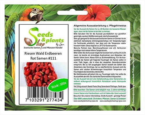 Stk - 100x Riesen rote Walderdbeeren Obst Pflanzen - Samen #111 - Seeds Plants Shop Samenbank Pfullingen Patrik Ipsa