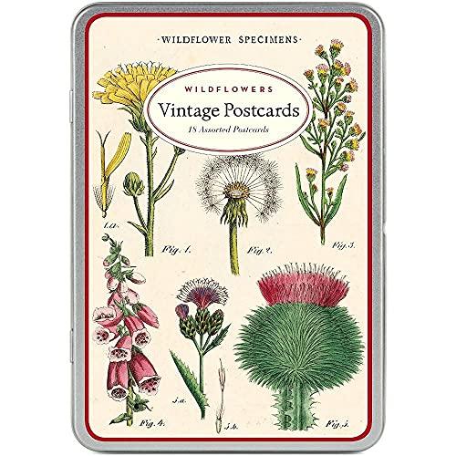 Cavallini & Co. Wildflowers Vintage Postcard Set