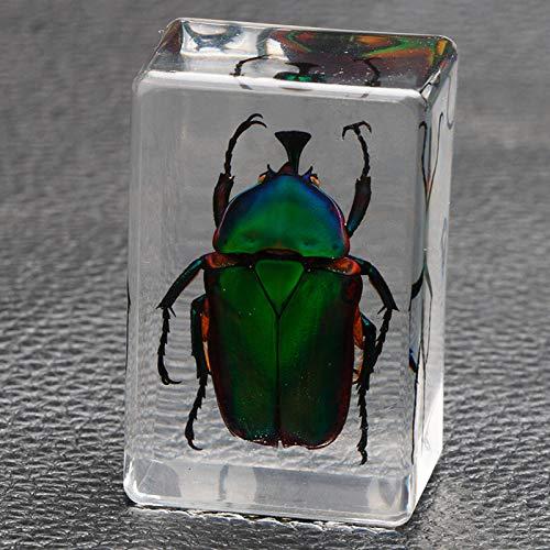 JYMEI Insectos muestras de,Especímenes de Animales,Taxidermia para la Educación Científica,Muestras de Insectos Reales,Pintura de enseñanza de observación de jardín de Infantes de Animales pequeños