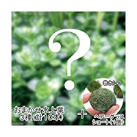 (水草)おまかせ水上葉 3種セット(計10本) + 巻きたて ヘアーグラスショートボール(無農薬)(1個) 北海道航空便要保温