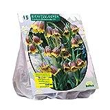 Fritillaria Michailovskyi 15 Stück Türkische Schachbrettblume Baltus Blumenzwiebel
