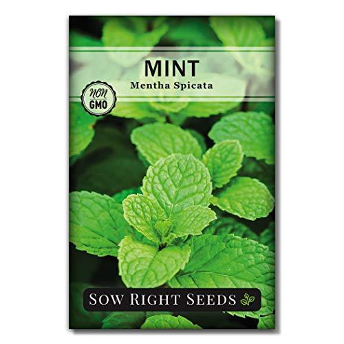 播种右种子 - 种植种子 - 非转基因传家宝种子 - 种植和种植中茶园,室内或室外的指示;伟大的园艺礼物(1)