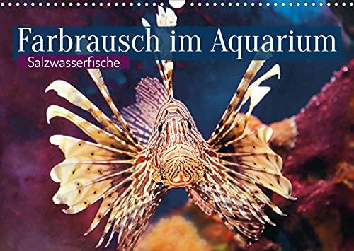 Farbrausch im Aquarium: Salzwasserfische (Wandkalender 2022 DIN A3 quer)