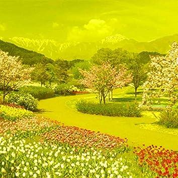 Primavera Dorada