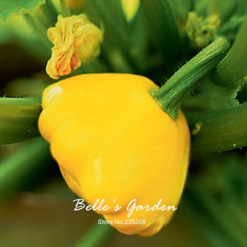 10pcs Interessante Patisson-Kürbis-Samen Gemüsesamen Honig süßen Kürbiskerne Bonsai Pflanze