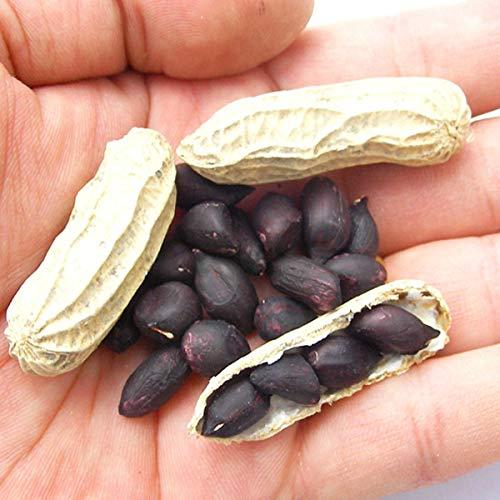 国華園 種 野菜たね 黒落花生 1袋(30ml)/メール便配送 21年春商品