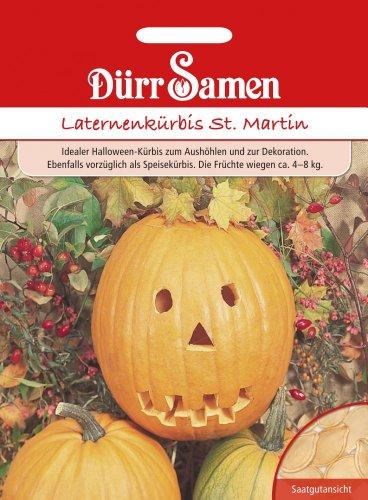 Dürr Samen 1911 Laternenkürbis St. Martin (Laternenkürbissamen)