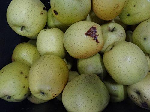 29年度訳あり青森県産りんご 王林10kg 加工用