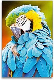 Premium - Lienzo de tela (60 x 90 cm de alto, imagen sobre bastidor), diseño de brustara amarillo (Ara arauna), Sudamérica (CALVENDO Animal);CALVENDO Animales