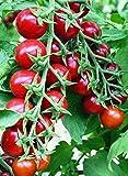 Seeds Cherry Tomato...image