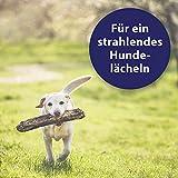 Quiko Canosept Zahnpflege Spray für Hunde, 100 ml - 5