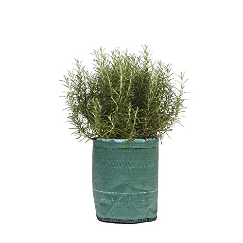 Pot à Planter Vert 35 litres