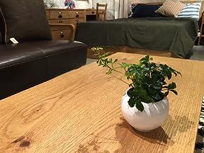 送料無料 シュガーバイン ハイドロカルチャー 観葉植物 シュガーパイン インテリア 北欧 ギフト お祝い おしゃれ ホワイトラウンドポット