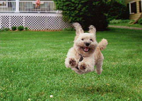 Running Dog Funny Birthday Card