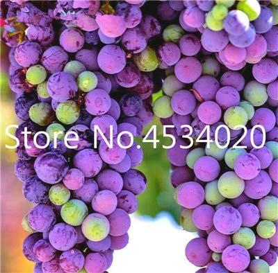 ! Hot Koop 30 stuks druiven planten Rare vinger Biologische Heirloom fruitgewassen, natuurlijke groei druiven boom bonsai voor huis tuin: 13