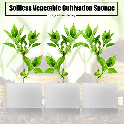 Zerodis Hydroponik Schwämme Soilless Gemüseanbau Gartenbau Gemüse Pflanze Pflanzenwachstum 50Pcs(32mm / 1.3) - 6