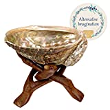 Alternative Imagination Hand Selected Premium 4 Inch Abalone Shell with Stained Wooden Cobra Stand