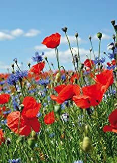 Rote Mohnblumen-Blumen Fototapete Blumenweinlese Tapete Wohnzimmer Dekor