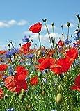 1art1 Blumen - Wildblumen-Wiese Mit Mohn- Und Kornblumen,